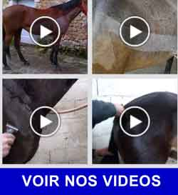 Tondeuses Chevaux Liveryman en action sur nos vidéos